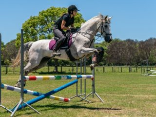 Talented mare
