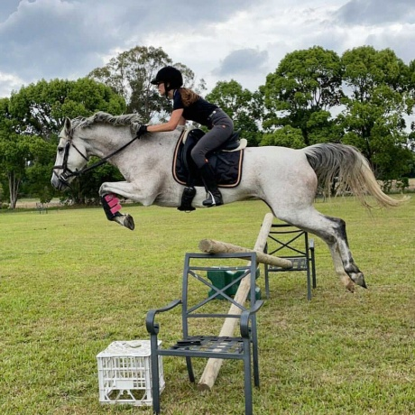 Show Jumping - Anglo Arabian in Queensland