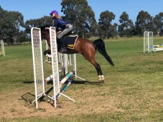 All Rounders - Arabian Pony in Victoria