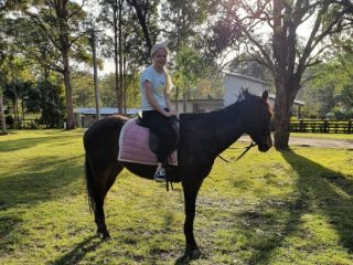 Thoroughbred in New South Wales