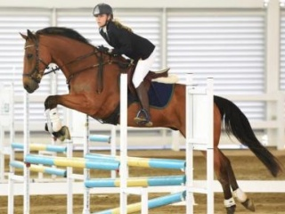 Awesome Bay Gelding