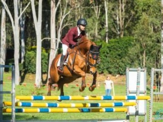 Talented Eventing and Showjumping Gelding
