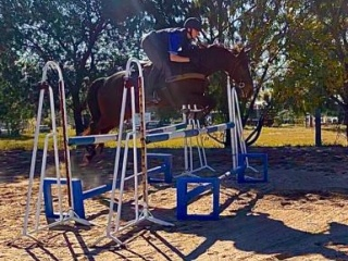 T'Bred Showjumper/ Eventer