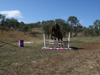 Chunky TB mare looking for her new home. Will excel in any sphere and showing great scope.