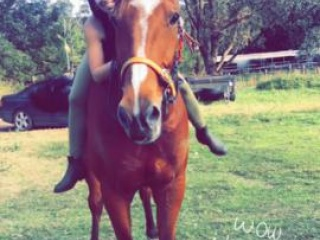 Beautiful gelding for sale