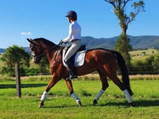 Outdtanding young dressage prospect