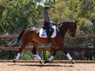 Stunning Dressage or Large Hunter