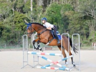 Super talented gelding - Price Reduced