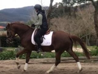Stunning Young Dressage Prospect