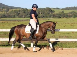 Delightful Dressage/All-rounder Pony