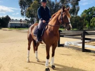 Gentle Mare suitable for variety of disciplines