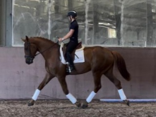 Flash Fursten-Look dressage young horse