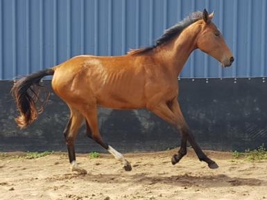 2yr old Filly future potential