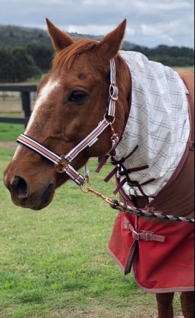 Family Friend - Thoroughbred in Victoria