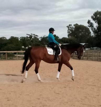 Talented gelding with bling