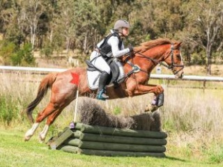 Sweet, competitive, reg riding pony 14.1hh geld