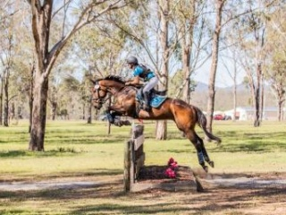 Eventing & Showjumping Schoolmaster
