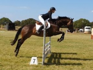Quality performance bred WB mare