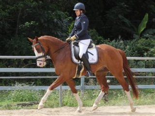 Outstanding Dressage Gelding by Quaterback
