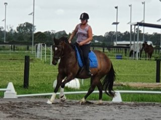 Quarter Horse in New South Wales