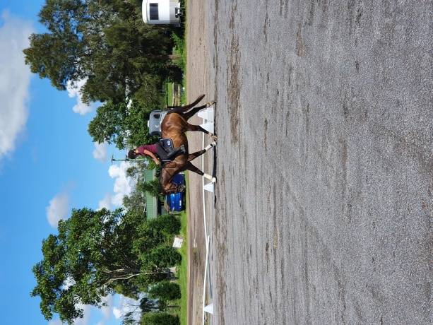Performance Horses in New South Wales