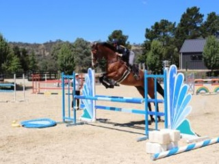Reliable and experienced Eventer / Jumper
