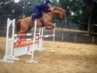 Quiet & Fun Showjumper with potential