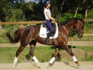 Eye catching wb cross mare