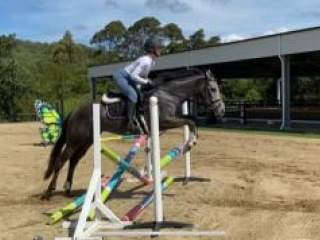 Sweet All rounder / Showjumper