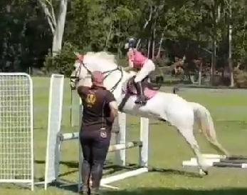 Outstanding All rounder Pony