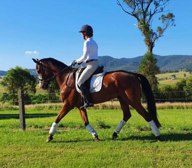 Outstanding young dressage prospect