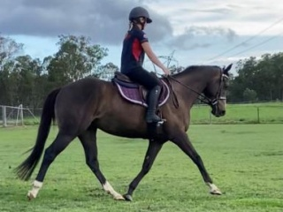 Beautiful TB Gelding
