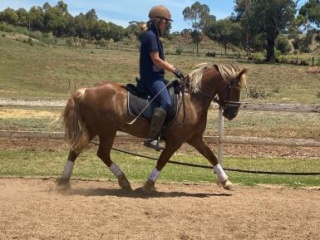 Dressage Pony for the future