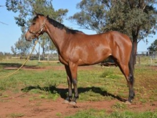 Exceptional quiet filly to suit the entire family