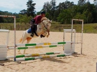 *Price Reduced* - Welsh B Cremello Mare