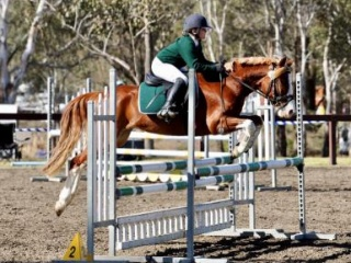 Competitive Interschool showJumping/eventing pony