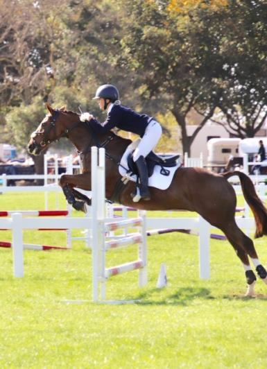 Bold/athletic Show jumper/all rounder