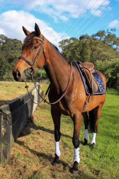 EVENTING YOUNGSTER