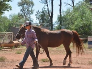 Looking for a good kids pony?