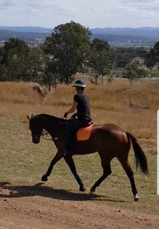 Well bred TB mare, fit, sound and ready to go