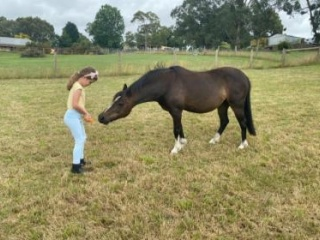 """""""Mabel"""" is sweet, quiet and kind pony"""