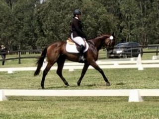 4yo Gelding by Canford Cliffs, a dude in every way