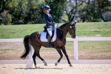 GRP Dressage Pony For Sale