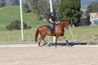 Dressage in South Australia