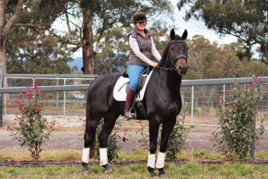 Skygame Sovereign - Exceptional Lipizzan Warmblood