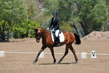 Competitive Mount for Confident Young Rider