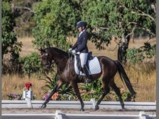 Top moving dressage mare