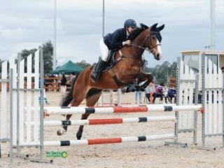 Irish Sport Horse Gelding - Showjump/Event
