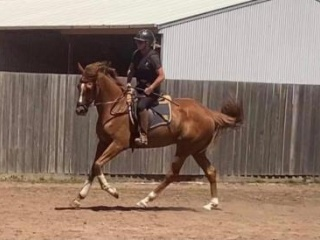 Lovely Quiet OTT gelding - Allrounder