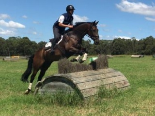 Fantastic Allrounder Eventer